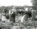 Picture of Kent - Hop Pickers c1890s - N267