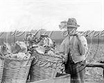Picture of Kent - Kentish Farmer c1900s - N922
